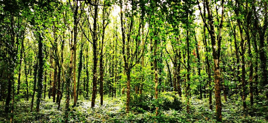 Native Woodlands in Ireland Ecoplan Forestry