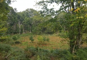 Native Woodland in Ireland Ecoplan Forestry