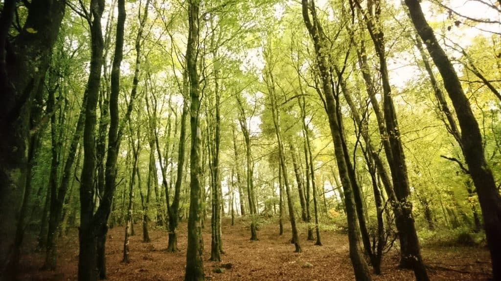 Forest Bathing Ecoplan