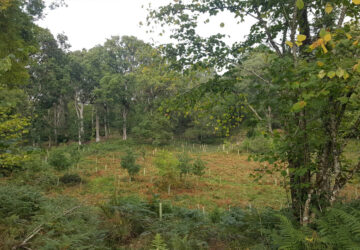 Native Woodland Conservation