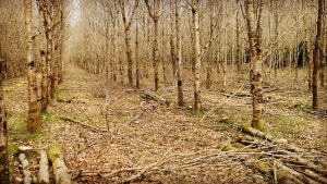 Woodland Improvement Scheme