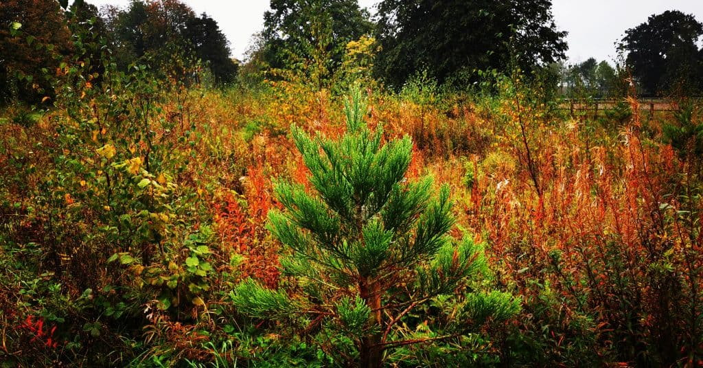 Forest Biodiversity at the Giants Grove