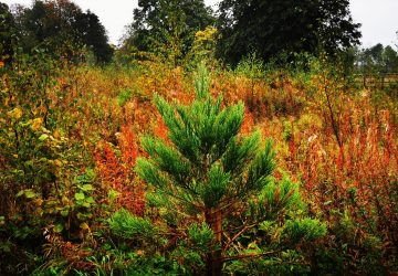The Giants Grove – Planted and Managed for Biodiversity