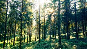 Forest Asset Management