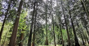 Forest Harvesting and Thinning